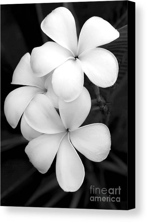 Macro Canvas Print featuring the photograph Three Plumeria Flowers In Black And White by Sabrina L Ryan