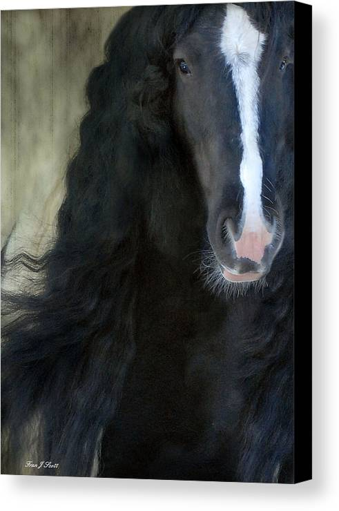 Gypsy Stallion Canvas Print featuring the photograph Valentino Dreams by Fran J Scott