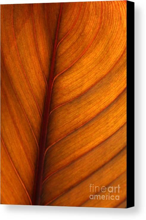 Leaf Canvas Print featuring the photograph Backlit Leaf by Sabrina L Ryan