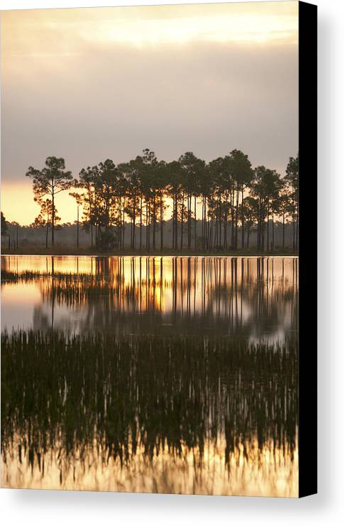 Florida Canvas Print featuring the photograph Wildlife by Gouzel -