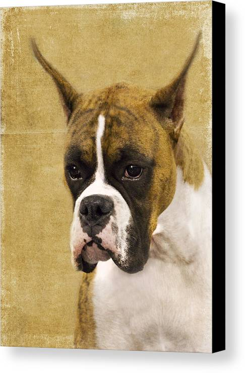 Boxer Canvas Print featuring the photograph Boxer by Rebecca Cozart