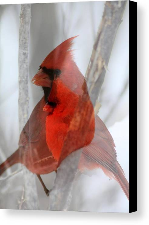 Cardinals Canvas Print featuring the photograph Cardinal Collage by Rick Rauzi