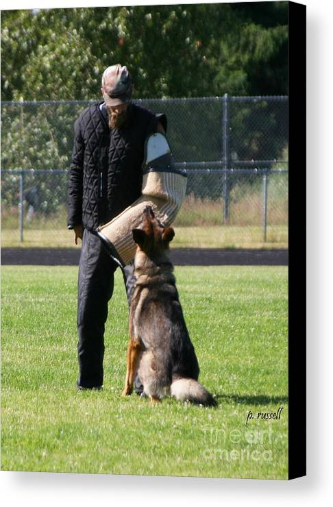 Schutzhund Canvas Print featuring the photograph P-0107 by P Russell