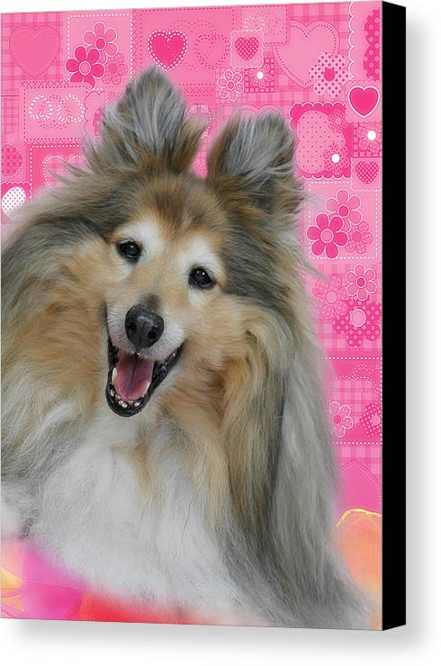 Shelties Canvas Print featuring the photograph Sheltie Smile by Christine Till