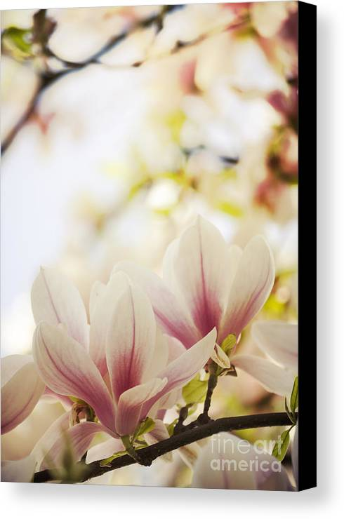 Magnolia Canvas Print featuring the photograph Magnolia by Jelena Jovanovic