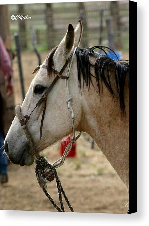 Cowboy Canvas Print featuring the photograph A Cowboys Partner.. by Carol Miller