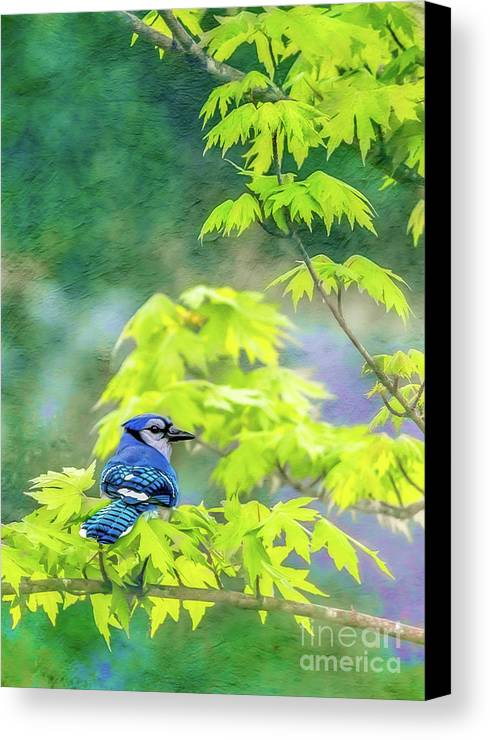 Bluejay Canvas Print featuring the photograph Bluejay by Larry McMahon