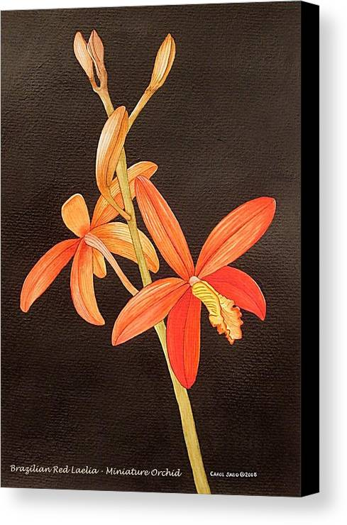 Art Canvas Print featuring the painting Brazilian Red Laelia-miniature Orchid by Carol Sabo