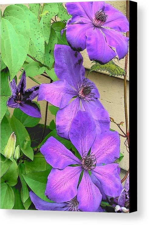 Clematis Canvas Print featuring the photograph Clematis Trail by Vijay Sharon Govender