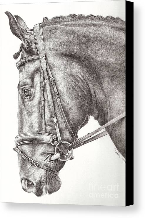 Horse Canvas Print featuring the drawing Dobbin by Karen Townsend