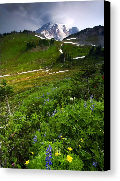 Rainier Canvas Print featuring the photograph From The Top by Mike Dawson