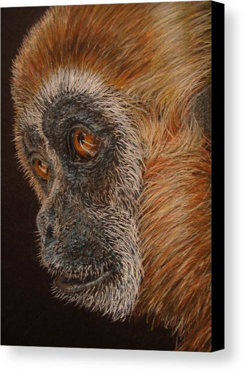 Animals Canvas Print featuring the drawing Gibbon by Karen Ilari
