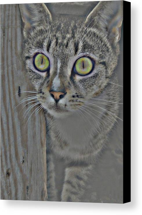 Cat Canvas Print featuring the photograph Hypnotize by JAMART Photography