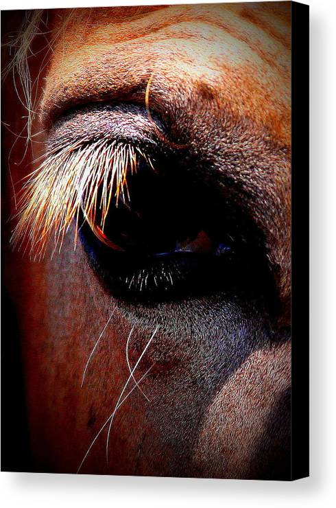 Horse Canvas Print featuring the photograph Img_9984 - Horse by Travis Truelove