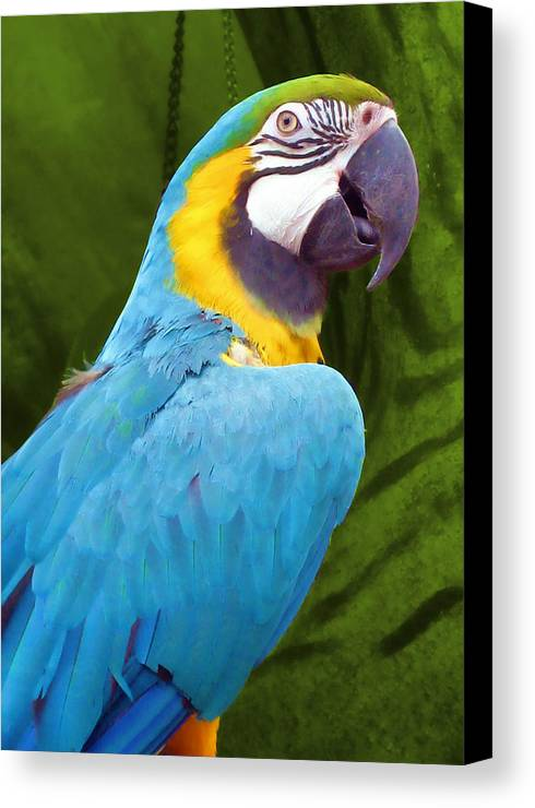 Bird Canvas Print featuring the photograph Macaw by JAMART Photography