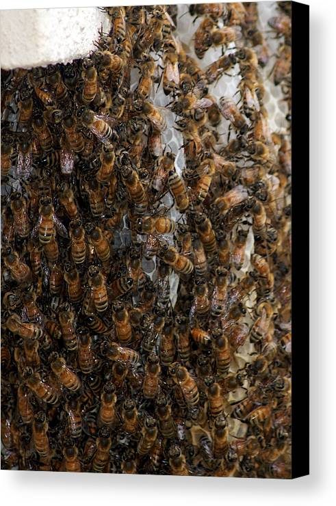 Larva Canvas Print featuring the photograph Mass Effect by Jack Norton