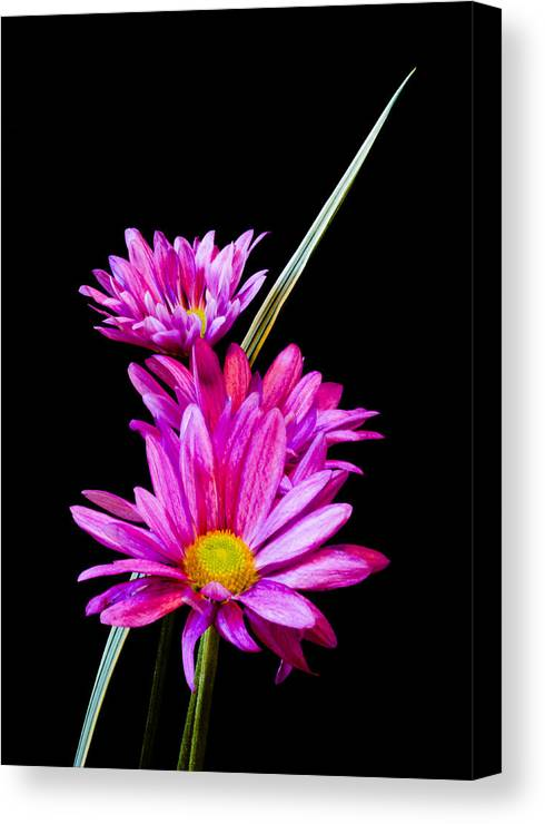 Botanical Canvas Print featuring the photograph Purple Flowers by Edward Myers