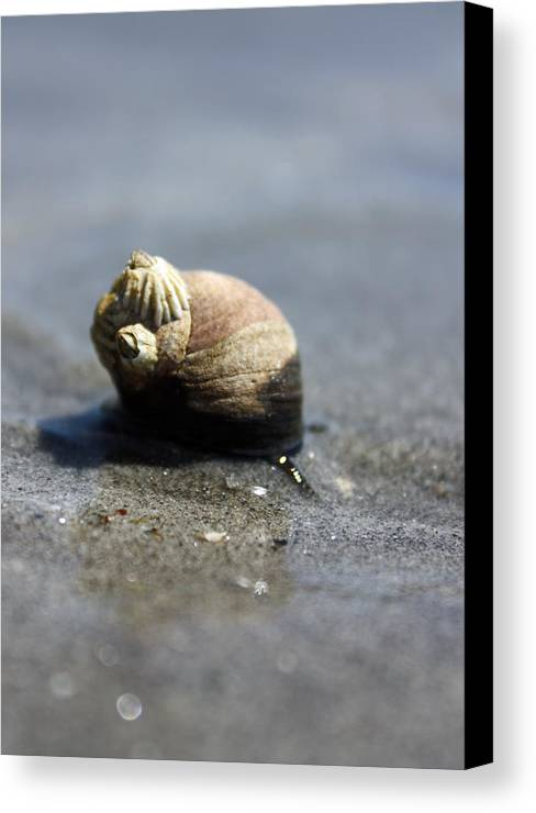 Snail Canvas Print featuring the photograph Slow Traveler by Becca Brann