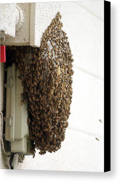 Larva Canvas Print featuring the photograph Strength In Numbers by Jack Norton