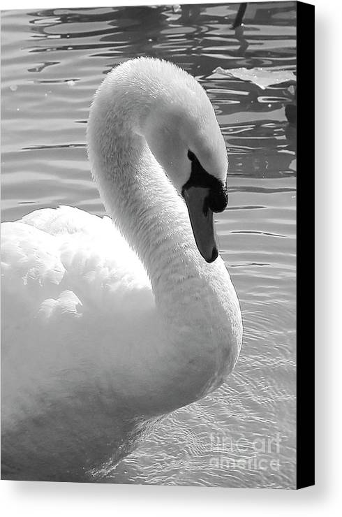 Elegant Canvas Print featuring the photograph Swan Elegance Black And White by Carol Groenen