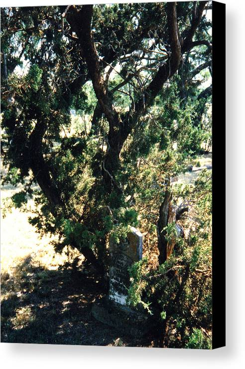 Hidden Grave Stone Mesquite Canvas Print featuring the photograph The Hidden Grave by Cindy New