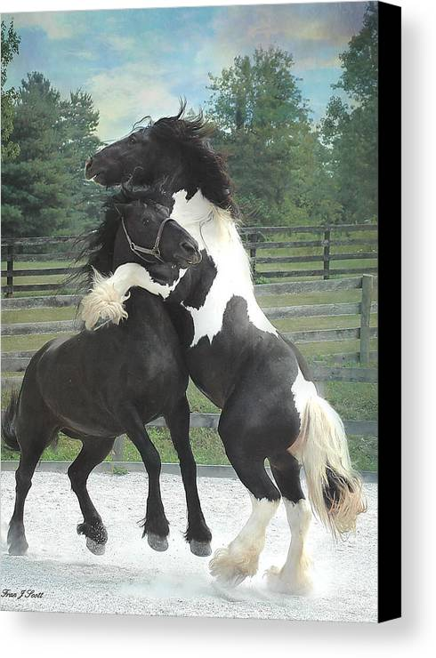 Horses Canvas Print featuring the photograph The Posturing Game by Fran J Scott