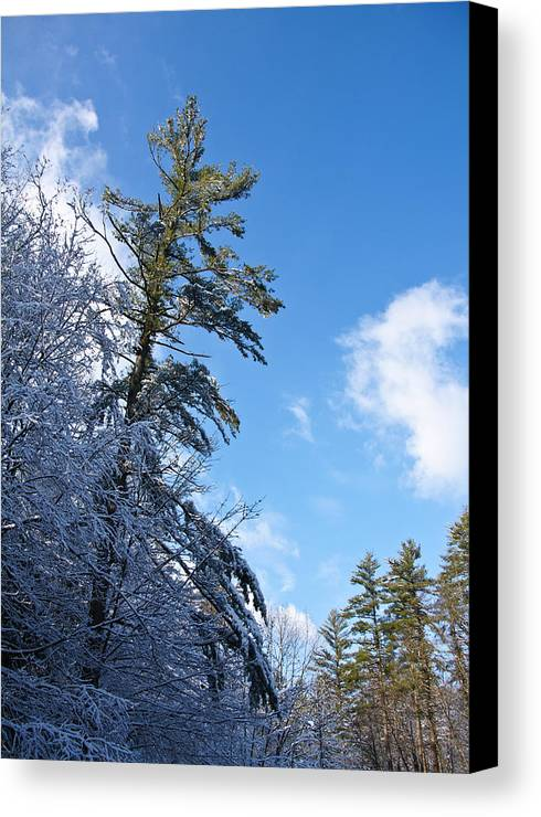 Winter Canvas Print featuring the photograph Winter Tree And Sky by Edward Myers