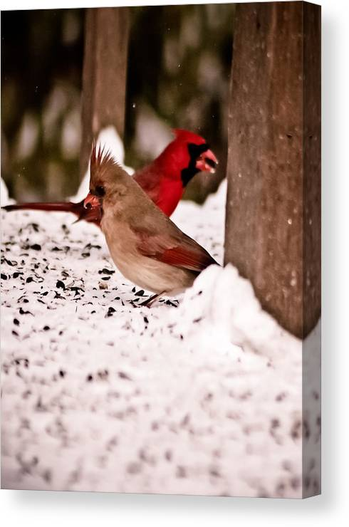 Red Canvas Print featuring the photograph A Cardinal Couple by Sarah Cafaro