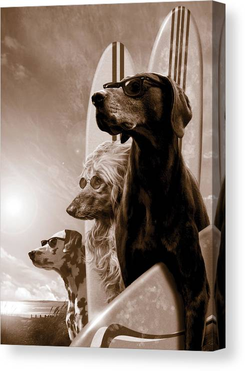 Animal Canvas Print featuring the photograph Changes by MGL Meiklejohn Graphics Licensing