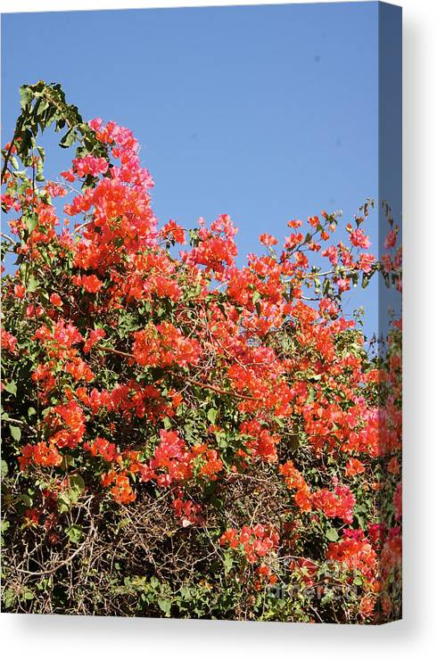 Africa Canvas Print featuring the photograph flower wall in Madagascar by Rudi Prott