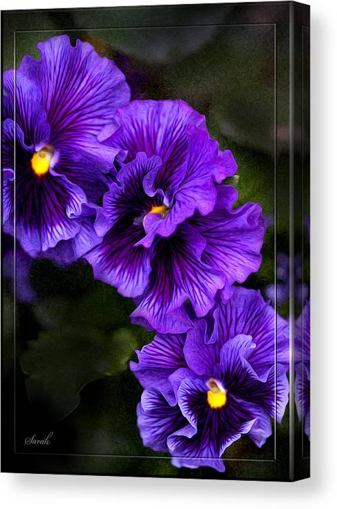 Purple Pansy Canvas Print featuring the photograph Purple Pansy by Sarah Dowson