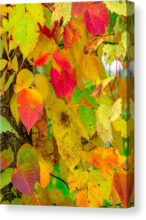 Autumn Canvas Print featuring the photograph Autumn by Brian Stevens