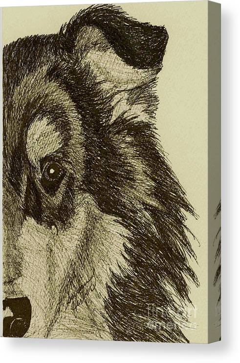 Collie Canvas Print featuring the drawing Collie by Susan Herber
