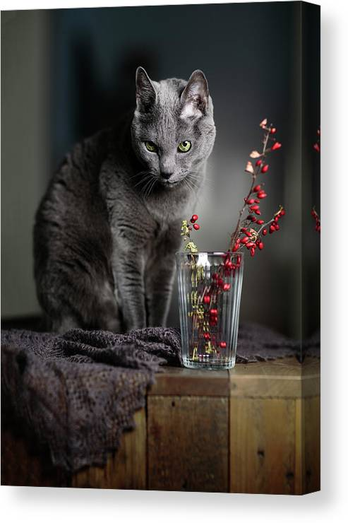 Russian Blue Canvas Print featuring the photograph Russian Blue by Nailia Schwarz