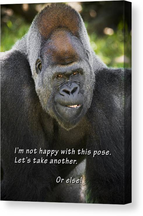 Gorilla Canvas Print featuring the photograph Another Pose by Chad Davis