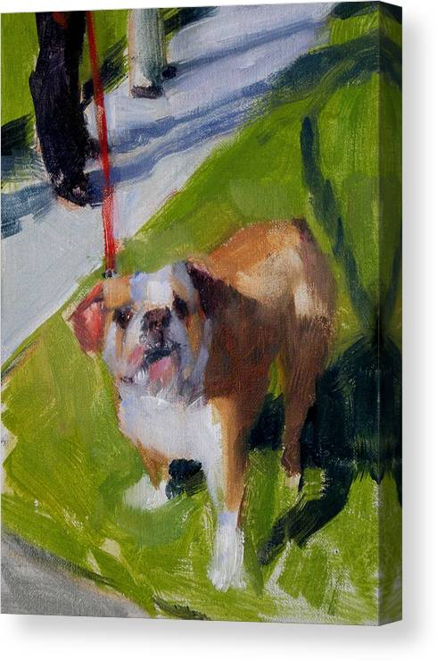 Bulldogs Canvas Print featuring the painting Buddy On A Red Leash by Merle Keller
