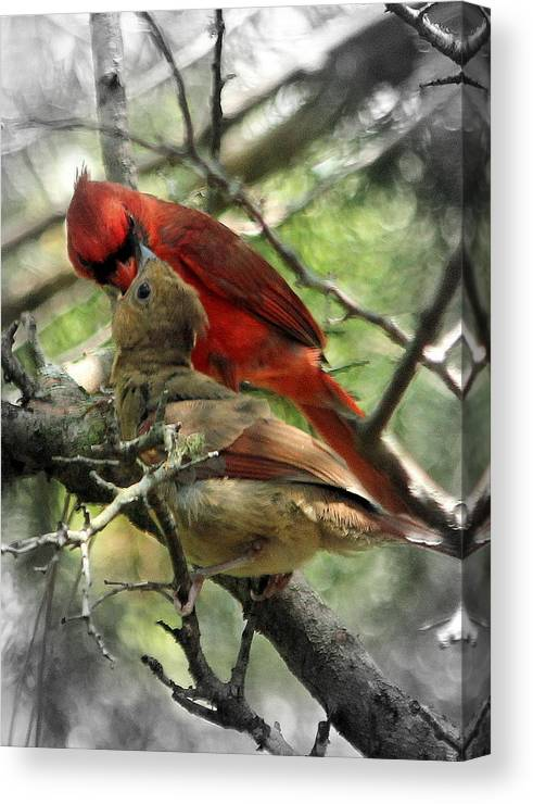 Cardinal Canvas Print featuring the photograph Happy Fathers Day by Lisa Scott