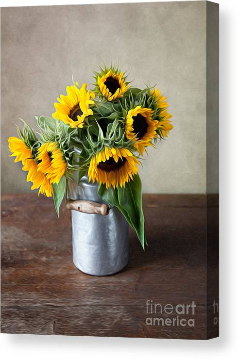 Sunflower Canvas Print featuring the photograph Sunflowers by Nailia Schwarz
