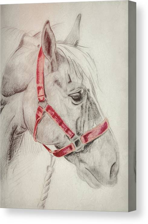 Horse Canvas Print featuring the photograph Tequila Sketch by JAMART Photography