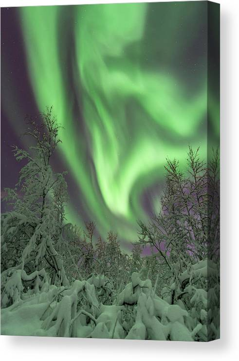 Landscape Canvas Print featuring the photograph The Flame by Mia Stalnacke