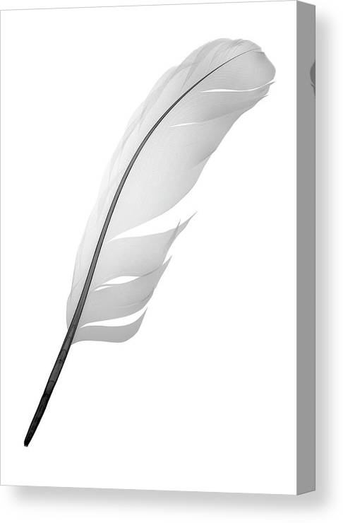 Animal Wing Canvas Print featuring the photograph X-ray Of Feather by Nick Veasey