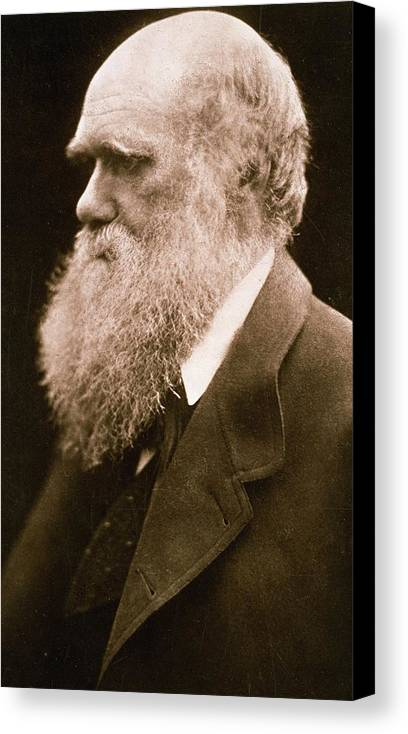 Beard Canvas Print featuring the photograph Charles Darwin by Julia Margaret Cameron