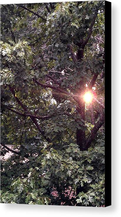 Sun Canvas Print featuring the photograph Setting Sun by Kenny Glover