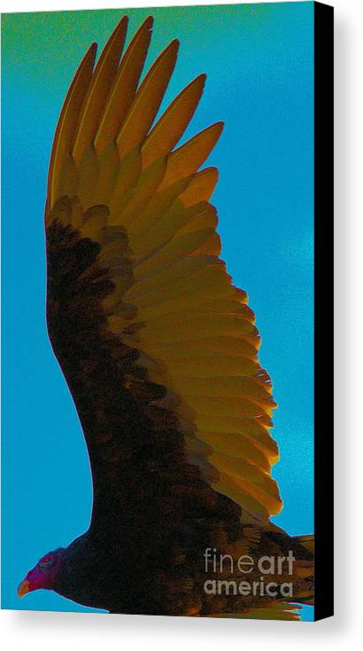 Turkey Vulture Canvas Print featuring the photograph Vulture In Flight by David Call
