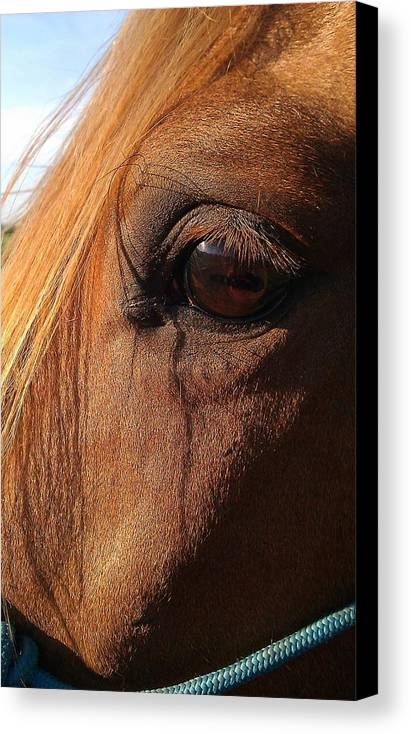 Horse Canvas Print featuring the photograph Window To The Soul by Darlene Rodgers
