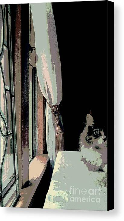 Maine Coon Canvas Print featuring the photograph Yes I Am The Master by Jacqueline McReynolds