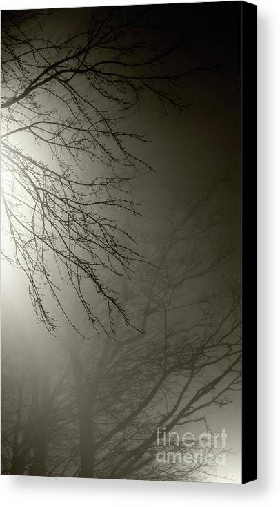 Trees Canvas Print featuring the photograph Branches In The Fog by Susan Isakson