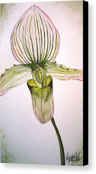 Watercolor Canvas Print featuring the painting Green Slipper Orchid by K Hoover