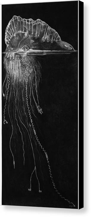 Environment Canvas Print featuring the drawing Jellyfish With Cords by Elizabeth Comay