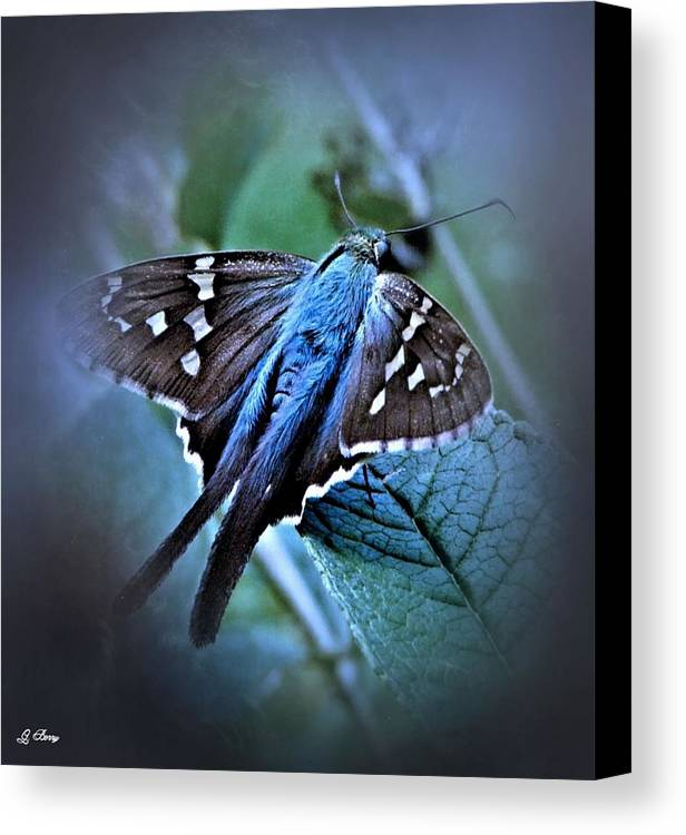 Butterfly Canvas Print featuring the photograph Blue Skipper Moth by G Berry